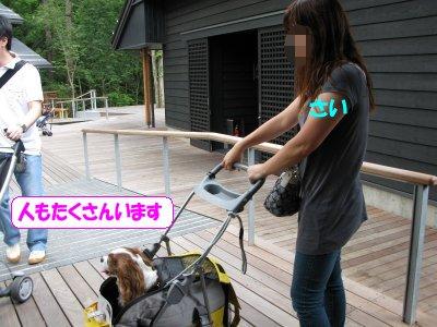 b0185323_2323878.jpg