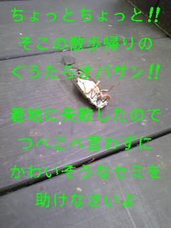 セミ_f0148927_19361820.jpg