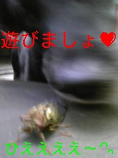 セミ_f0148927_19511181.jpg