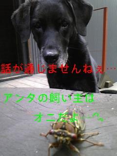 セミ_f0148927_19524458.jpg