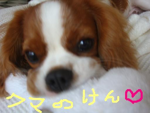 b0181248_704025.jpg