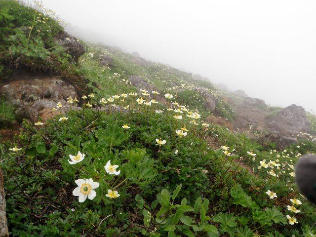 夏山登山ツアー 「北アルプス、黒部源流」 参加19名_d0007657_7152332.jpg
