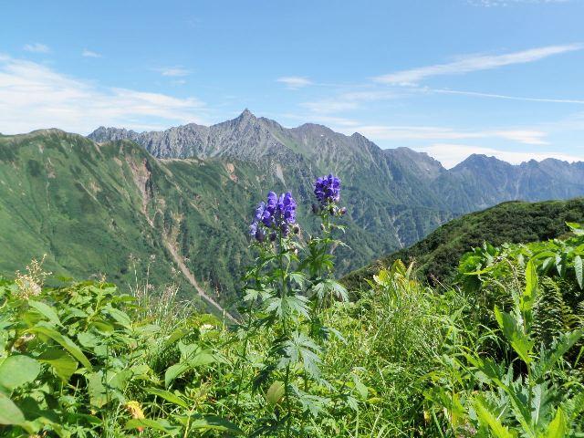 夏山登山ツアー 「北アルプス、黒部源流」 参加19名_d0007657_8453.jpg