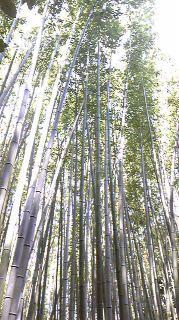 京都_02_b0181865_18473144.jpg