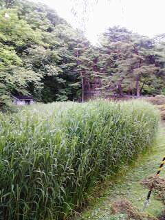 神指城跡⑧~散歩を終えて④_a0087378_5481685.jpg