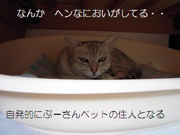 c0139488_0134735.jpg