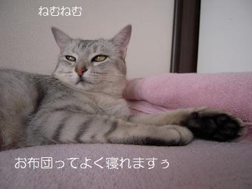 c0139488_0232549.jpg