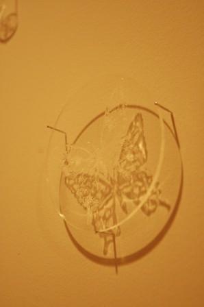捕われる蝶は逃げられるのか?_f0083294_22305778.jpg
