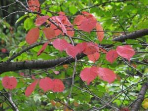 秋の味覚_e0120896_73255.jpg