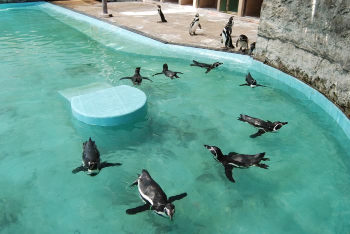 #96 動物園_b0117208_1924789.jpg