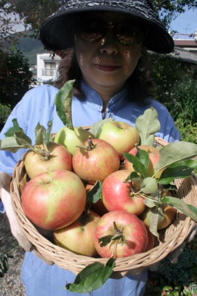 リンゴ収穫・・・・・・・・白髭_d0138130_8574260.jpg