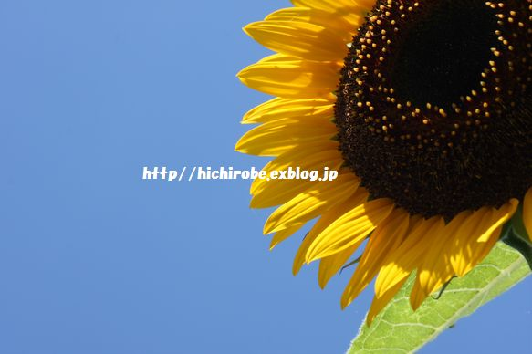 f0039446_1830123.jpg
