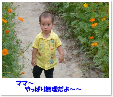 c0179053_19432322.jpg