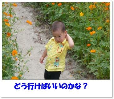 c0179053_194385.jpg