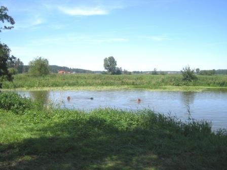 ドイツで泳ぐ ~バイエルンの川編_f0116158_21111.jpg