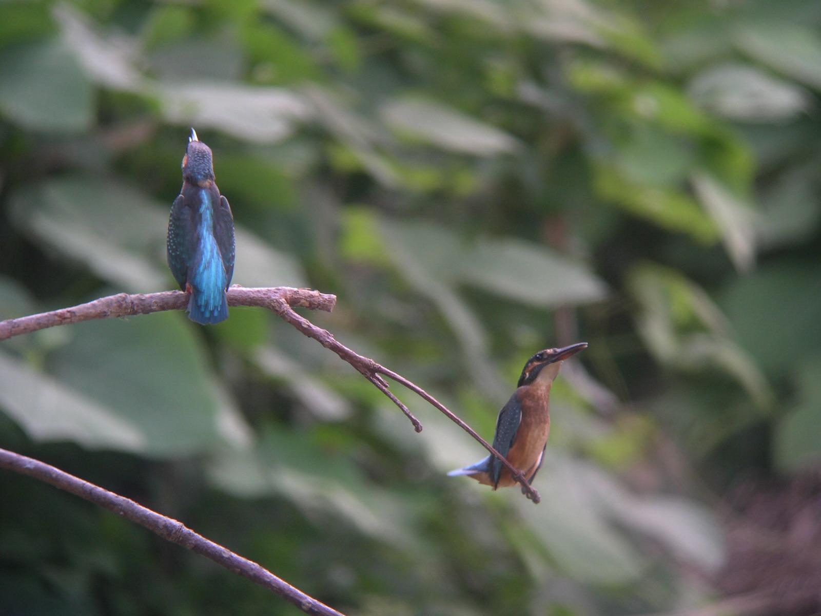 ★先週末の鳥類園(2009.8.22~23)_e0046474_17404737.jpg