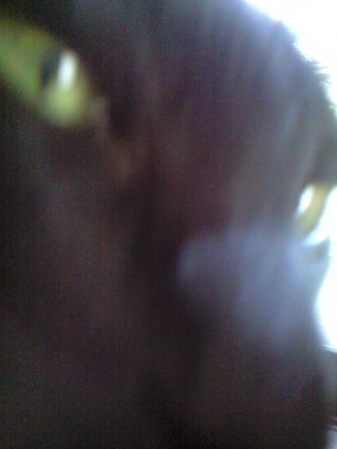 f0127282_11521315.jpg