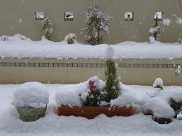 雪が降る3.JPG
