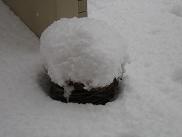 寄せ植えの雪.JPG