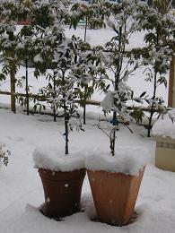 雪が降る2.JPG