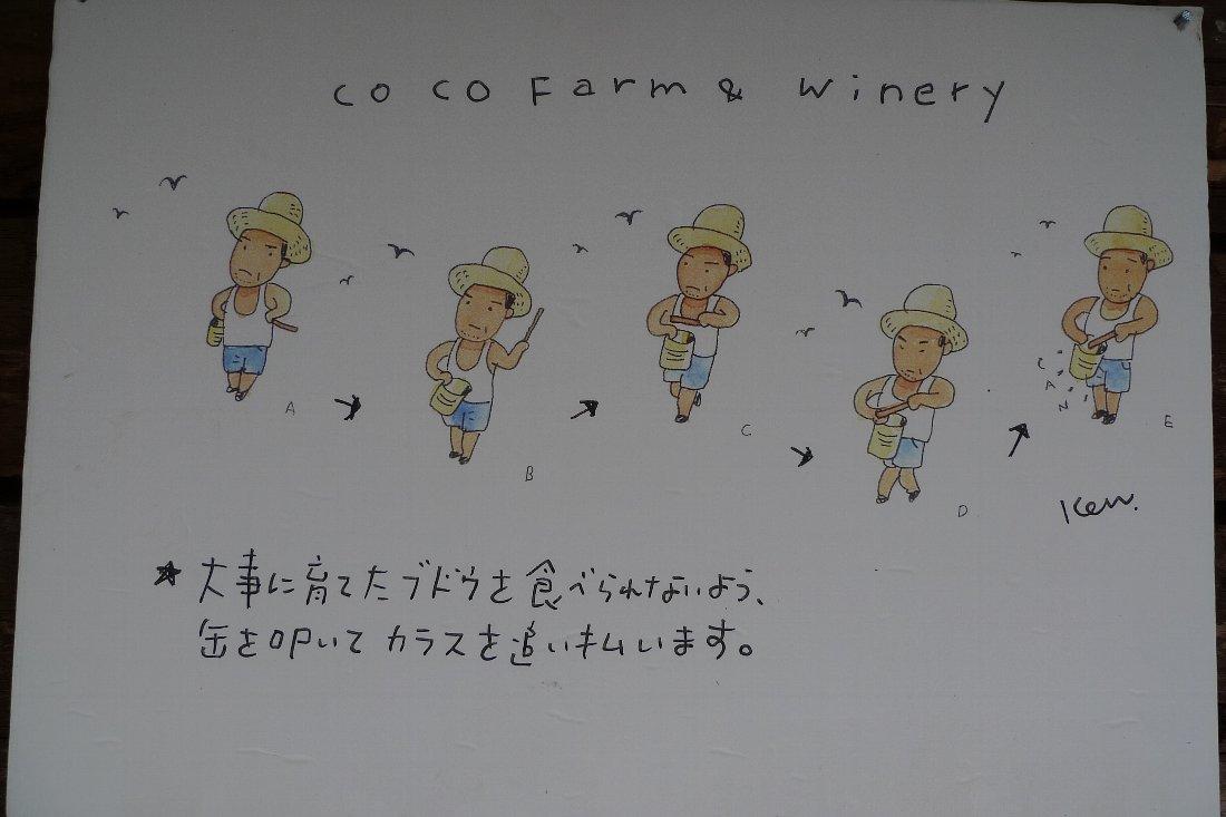 今年のブドウの出来具合は~_c0124795_013528.jpg