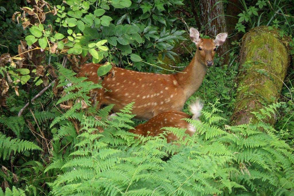 草陰に飛び込みました/鹿の親子_b0024798_541639.jpg