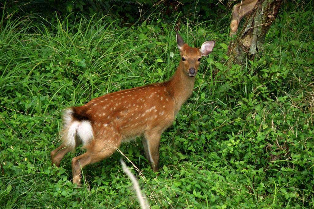 草陰に飛び込みました/鹿の親子_b0024798_542779.jpg