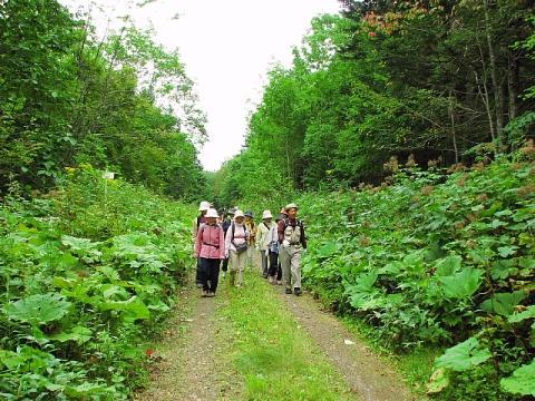 2009年8月27日(木):歩く道を歩く_e0062415_17452361.jpg