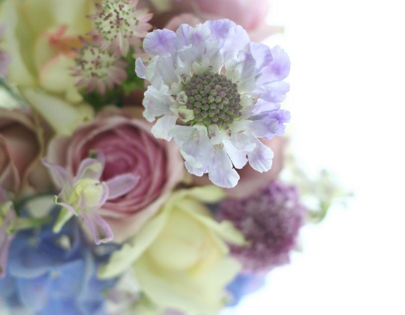 12月13日「自分の花を自分で撮ろう」会 カメラ&リースレッスンのご案内_a0042928_2153965.jpg