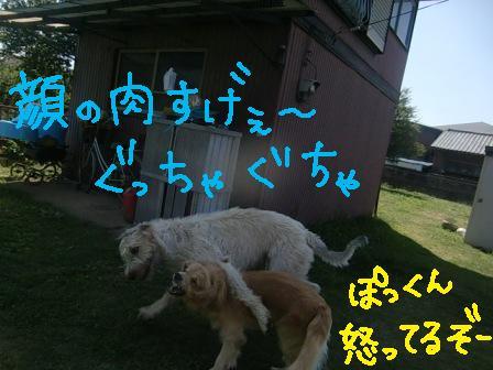 f0176830_1675595.jpg