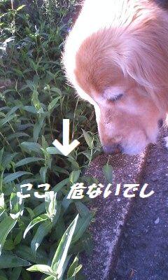 b0127531_8174076.jpg