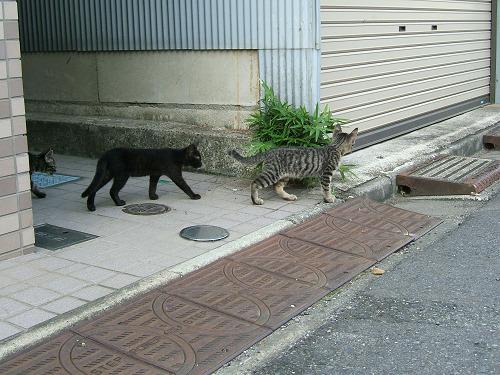 近所で見かけた子猫たち その2 (写真7+2枚)_e0089232_19285860.jpg