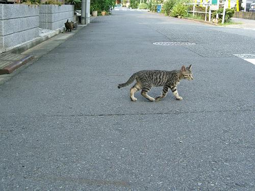 近所で見かけた子猫たち その2 (写真7+2枚)_e0089232_19291521.jpg