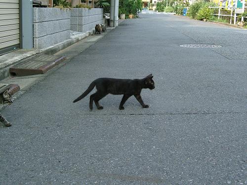 近所で見かけた子猫たち その2 (写真7+2枚)_e0089232_19292327.jpg