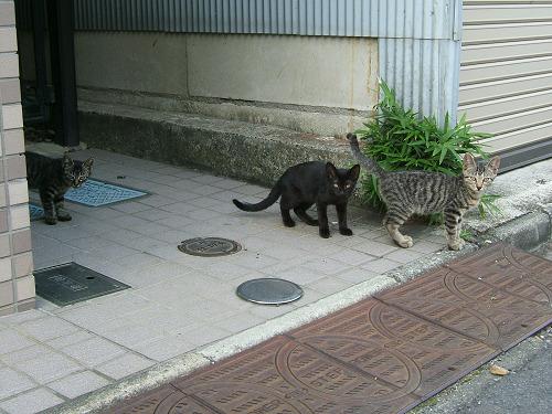 近所で見かけた子猫たち その2 (写真7+2枚)_e0089232_1929735.jpg