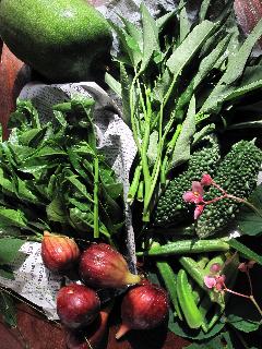 朝採りオーガニック野菜_f0031259_10353594.jpg