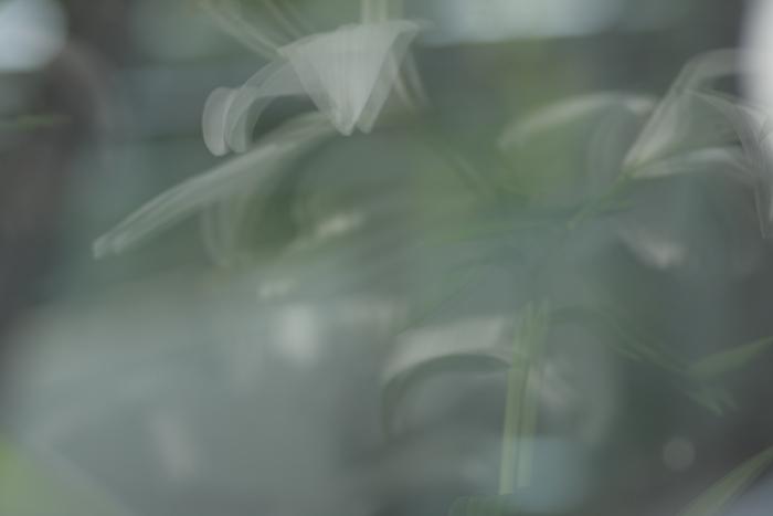 d0124866_2012565.jpg
