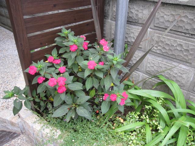 日蔭の庭に_e0181373_2139174.jpg