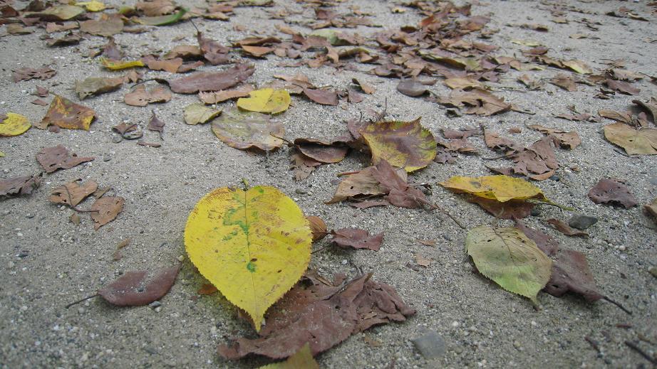 もう秋の足音が。。。_a0107574_6374992.jpg