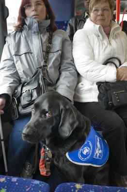スイスの盲導犬さん_a0066192_1491669.jpg