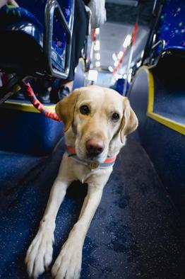 スイスの盲導犬さん_a0066192_9271171.jpg