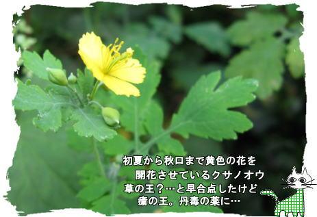 f0137096_14302190.jpg