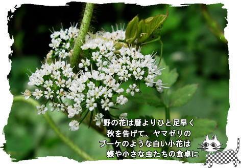 f0137096_14305022.jpg