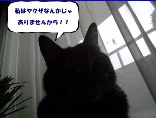 d0057701_15225139.jpg