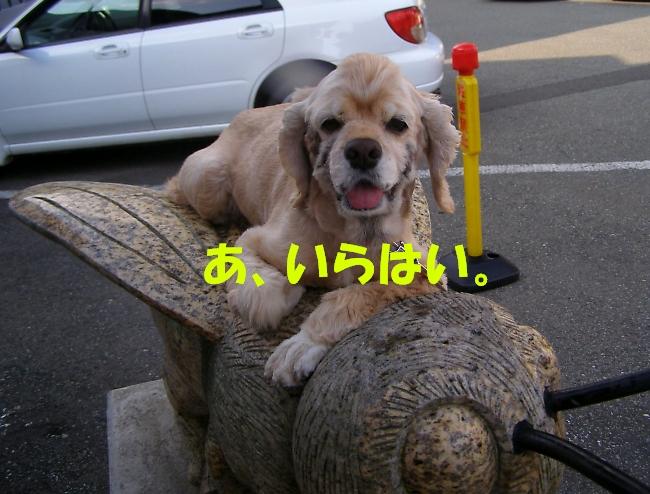 b0067012_20401520.jpg