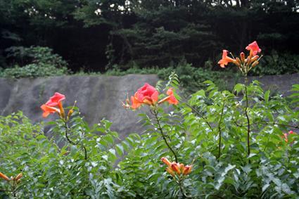 渋滞ウォーカー 東北道版 〜スリ抜けの美学〜_f0203027_20392363.jpg