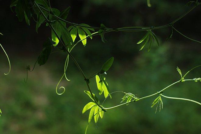 green line_e0171336_13304339.jpg