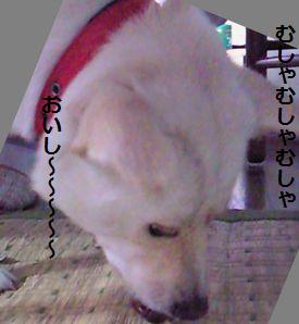 f0195543_2263680.jpg