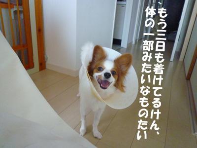 b0170863_0111478.jpg