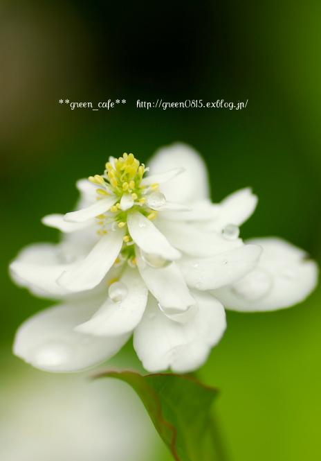 f0163583_21432899.jpg